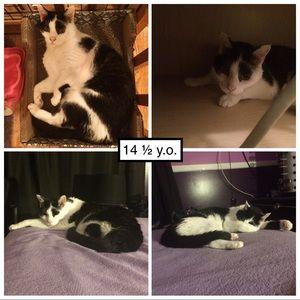 Pandy-Poo, my fur angel: 9/1/2003 - 11/11/2019😢😭